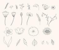 Hand-drawn bloemreeks Royalty-vrije Stock Afbeelding