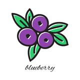 Hand drawn blueberry in doodle style. Vector. Illustration.  Sketch Stock Images