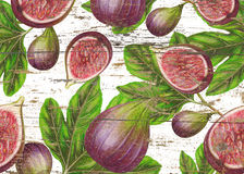 Hand drawn botanical fig pattern. Fruit background with fig illustration Royalty Free Stock Images