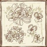 Hand drawn botanical sketches set Royalty Free Stock Image