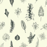 Hand drawn botany vector seamless pattern. Vintage background. Hand drawn botany vector seamless pattern. Vintage background with exotic plants Royalty Free Stock Photography