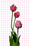Hand drawn bouqet of tulip Stock Images