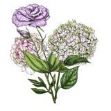 Hand drawn bouquet of phlox. Eustoma and peony flowers  on white background. Botanical Royalty Free Stock Photo