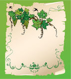 Hand drawn Branch of grapes on old paper scroll. Design for menu or wine label Stock Photo