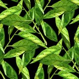 Hand drawn branch with green leaves seamless pattern Royalty Free Stock Photography