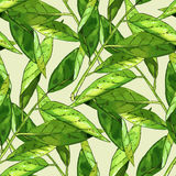 Hand Drawn Branch With Green Leaves Seamless Pattern Royalty Free Stock Image
