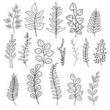 Hand drawn branches with leaves and flowers. Rustic doodle vector branching decoration isolated. Branch floral leaf, twig, rustic frame illustration Stock Photo