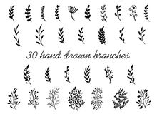 Hand drawn branches with leaves isolated on white background. Decorative floral elements for your design. Vintage vector. Collection royalty free illustration