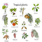 Hand drawn branches and leaves of tropical plants Royalty Free Stock Images