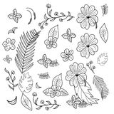 Hand drawn branches and leaves of tropical plants. Hand drawn flowers and branches and leaves of tropical plants Royalty Free Stock Images