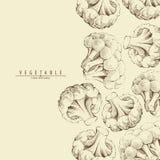 Broccoli or cauliflower background Royalty Free Stock Image