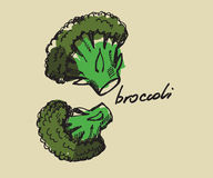Hand drawn broccoli Stock Image