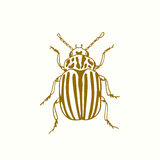 Hand drawn bug Royalty Free Stock Photos
