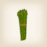 Hand drawn bunch of asparaguses Stock Image