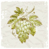 Hand drawn bunch of grapes. Grunge hand drawn bunch of grapes on vintage paper background vector illustration
