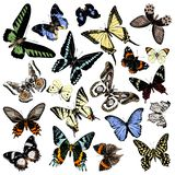 Hand drawn butterflies collection royalty free stock image