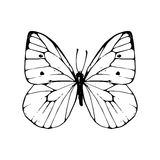 Hand drawn butterfly Stock Photo