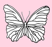 Hand drawn butterfly Stock Image