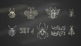 Vector set of chalk woodland insects. Stock Image
