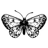 Hand drawn butterfly Stock Photos