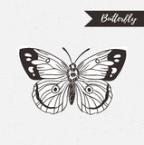 Hand drawn butterfly logo design. Vector element on the grunge background. Stock Images