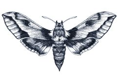 Free Hand Drawn Butterfly Tattoo. Dotwork Tattoo. Hummingbird Hawk Moth. Macroglossum Stellatarum. Lepidoptera. Royalty Free Stock Photos - 130066258