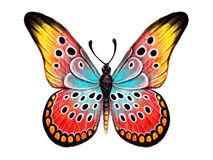 Hand drawn butterfly on white background Royalty Free Stock Photography