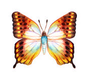 Hand drawn butterfly on white background stock photo