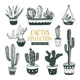 Hand drawn cacti and succulent Stock Photography