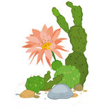 Hand drawn cactus blooms. Hand drawn illustration of cactus blooms flowers isolated on white Stock Images