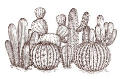 Free Hand Drawn Cactus. Western Desert Cacti Mexican Plants In Sketch Style Vector Illustration Stock Photography - 146695902