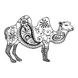 Hand drawn camel painted zentangl and doodle Stock Photo