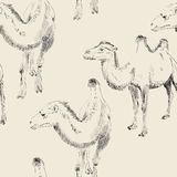 Hand drawn camel Stock Photo