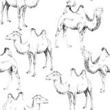 Hand drawn camel Royalty Free Stock Images