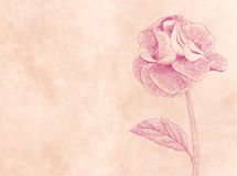 Hand drawn card with rose on pink paper background Royalty Free Stock Photos