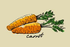 Hand drawn carrot Stock Photos