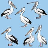 Hand drawn cartoon pelicans. Vector image of the different funny pelicans Stock Image