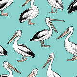 Hand drawn cartoon pelicans. Vector pattern of the different funny pelicans Stock Images