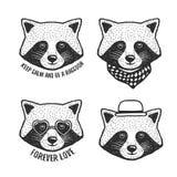 Hand drawn cartoon raccoon head prints set. Vector vintage illustration. Royalty Free Stock Photos