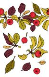 Vector  set of paradise apples design elements and pattern brush stock illustration