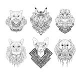 Hand drawn cat faces. Vector illustration. Stock Photo
