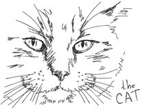 Hand drawn cat. Vector illustration Royalty Free Stock Photo