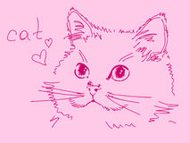 Hand drawn cat. Vector illustration Royalty Free Stock Photography