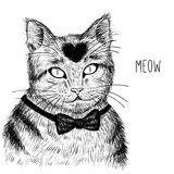 Hand drawn cat. Vector illustration. Royalty Free Stock Images