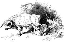 Hand Drawn Cattle Resting Royalty Free Stock Photos