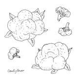 Hand drawn cauliflower Royalty Free Stock Photography