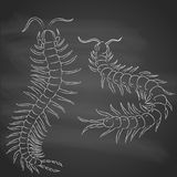 Hand-drawn centipede cartoon, insect icon. vector. Hand-drawn with  chalk centipede cartoon, insect icon.  painted on black background. vector illustration Stock Images