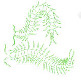 Hand-drawn centipede cartoon, insect icon. vector Royalty Free Stock Photo