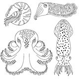 Hand drawn cephalopods for coloring book Stock Photo
