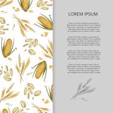 Hand drawn cereals corn wheat banner design Stock Images